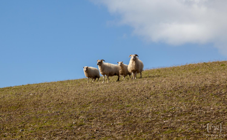 42-cabras-1-130815